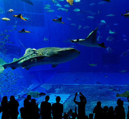 Monterey Bay Aquarium Package in California Hotel