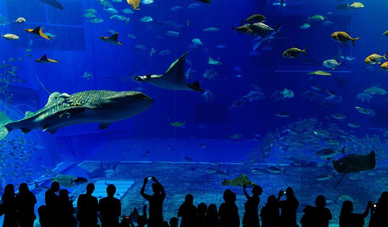 Monterey Bay Aquarium Package of California Hotel